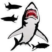 The white shark — Stock Photo