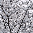 Stock Photo: Interweaving of branches under snow
