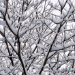 Interweaving of branches under the snow - Stock Photo