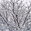 Stock Photo: Interweaving of branches under the snow