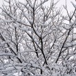 Interweaving of branches under the snow — Stock Photo #6924703