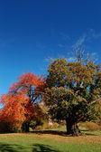 Autumn scenes — Stock Photo