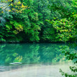 Beautiful Forest Pond — Stock Photo