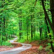 Green forest with pathway — Stock Photo #6811882