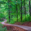 Stock Photo: Green forest with pathway