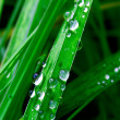 Raindrops on green grass — Stock Photo #6812000