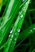 Yeşil çimenlerin üzerinde yağmur damlaları — Stok fotoğraf