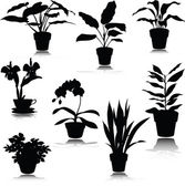 Potted flower vector silhouettes — Stock Photo