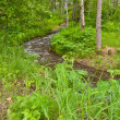 Meandering river in forest — Stock Photo