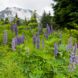 Purple flowers and mountain - Lizenzfreies Foto