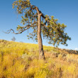Stock Photo: Old tree and dried grass