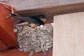 Ptak inkubacji w gniazdo — Zdjęcie stockowe