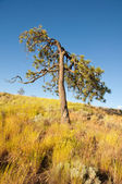 Old tree and dried grass — Stock Photo