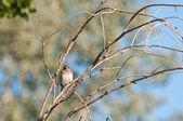 Brown bird on branch — Stock Photo