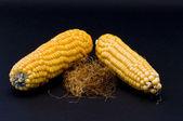 自分の髪で飾られた 2 つのトウモロコシの穂軸 — ストック写真