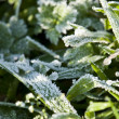 The grass in the cool icy morning in the meadow — Stock Photo