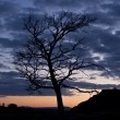 Tree on background night sky — Stock Photo #6910832