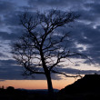 Tree on background night sky — Stock Photo