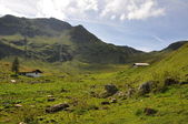 Green alpine meadow — Stock Photo