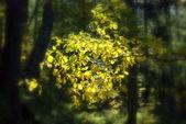 秋 — ストック写真