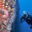 Maldives soft coral wall — Photo #7543896