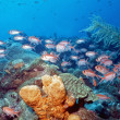 Caribbean Shallow Reef — Stock Photo
