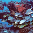 Stock Photo: Cozumel Fishes
