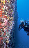 Maldives soft coral wall — Foto Stock