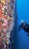 Parede de coral mole maldivas — Foto Stock