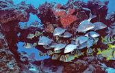 Cozumel Fishes — Stock Photo