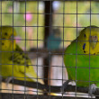 Parrot in a cage - Stockfoto