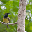 Yellow bird on the tree — Stock Photo