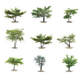 Isolated tree on white background — Stock Photo