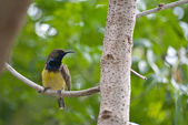 Yellow bird on tree — Stock Photo
