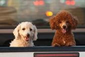 Simple street dog — Stock Photo