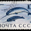 Postal stamp. Narwhal, 1971 — Stock Photo