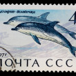 Postal stamp. Common dolphin, 1971 — Stock Photo #6994474