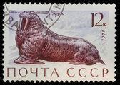 邮政邮票。海象 1971 — 图库照片