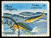 Poštovní razítko. dorado, 1975 — Stock fotografie
