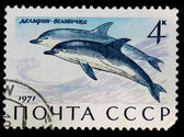 Postal stamp. Common dolphin, 1971 — Stock Photo