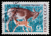 Postal stamp. Deer, 1969 — Stock Photo