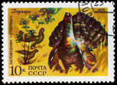 Postal stamp. Cock of the wood, 1975 — Photo