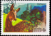 Postal stamp. Musk deer, 1975 — Stock Photo