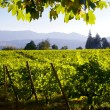 Vineyard Landscape — Stock Photo #6969244