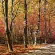 A Walk in the Fall - Stockfoto
