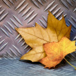 Leaves on Aluminum — Stock Photo