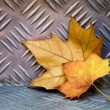 Leaves on Aluminum - Foto Stock