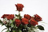 Bos van rode rozen geïsoleerd op wit — Stockfoto
