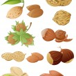 Set of various nuts — Stock Vector
