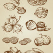 Set of various nuts - Image vectorielle